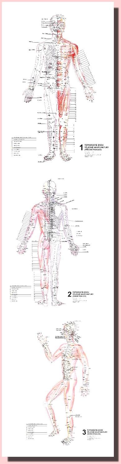 Topografie Bodu Telesne Akupunktury 3 Nastenne Mapy